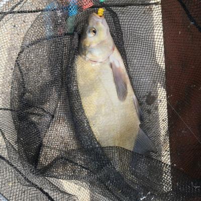 Pêche au coup - Feeder